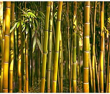 decomonkey Fototapete Bambus Natur 350x256 cm XXL