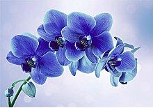 decomonkey Fototapete Blumen Orchidee 300x210 cm