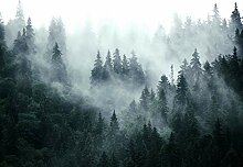 decomonkey Fototapete selbstklebend Wald 294x210