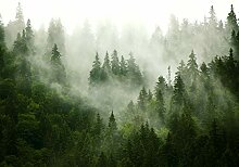 decomonkey Fototapete selbstklebend Wald 392x280