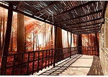 decomonkey Fototapete Tarrase Wald 300x210 cm