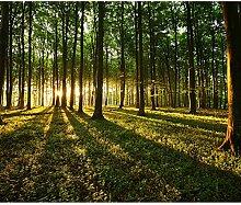 decomonkey Fototapete Wald 250x175 cm Tapete