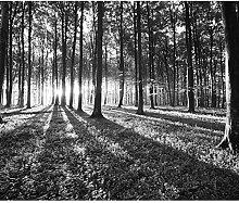 decomonkey Fototapete Wald 350x256 cm XL Tapete