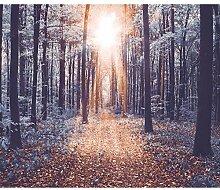 decomonkey Fototapete Wald 350x256 cm XXL Tapete