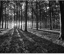 decomonkey Fototapete Wald 3D Natur 300x210 cm XXL