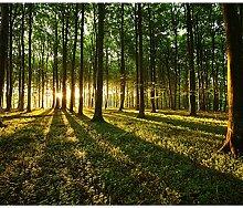 decomonkey Fototapete Wald Landaschaft 250x175 cm