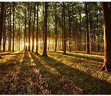 decomonkey Fototapete Wald Landaschaft 350x256 cm