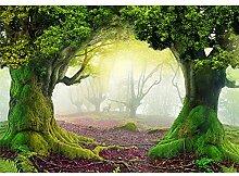 decomonkey Fototapete Wald Landschaft 350x256 cm