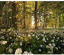 decomonkey Fototapete Wald Natur 350x256 cm XXL