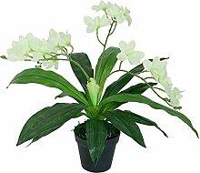 Decovego Künstliche Orchidee Kunstpflanze Pflanze Hellgrün mit Topf 60cm