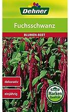 Dehner Blumen-Saatgut, Fuchsschwanz, 5er Pack (5 x