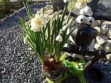 Deko Figur Gartenfigur Schaf wetterfest mit Pflanztopf XL Figur Garten Skulptur Gartendeko Gartenfiguren süßes Schaf mit Blumentopf