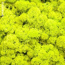 Deko moos Kunstpflanze Blume Hausgarten Party