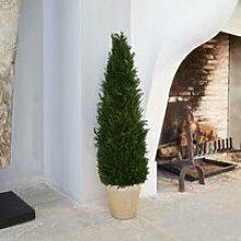 Dekopflanze Zypresse Arras