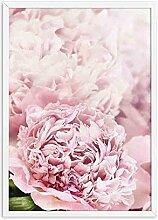 Dekoration Rosa Pfingstrose Blume Plakate und