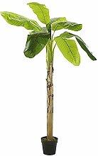 DekoWoerner Bananenbaum im Topf 260cm