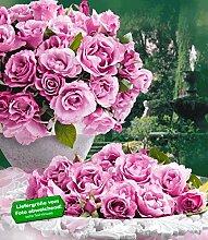 Delbard® Parfum-Rosen 'Dioressence®', 1 Pflanze Duftrosen Edelrose
