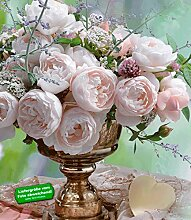 Delbard®-Rosen 'Vichy®', 1 Pflanze Beetrose