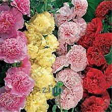 Delighted Multi Color Hollyhock flower Bonsai