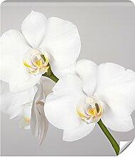 Demur Fototapete Vlies Orchidee - Tapete Tapeten