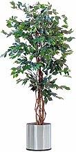 Der Bessershop Ficus Benjamini