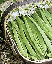Dicke Bohnen Puffbohnen Vroma 1 kg Samen