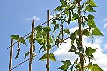 Dickes dunkles Bambusrohr Tonkinstäbe
