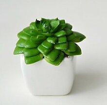 die fleischige eingetopft grünen pflanzen und