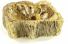 DIVERO versteinertes Holz Waschschale Aufsatz-Waschbecken Handwaschbecken Fossil kleine leichte Ausführung max. 22 kg innen poliert außen naturbelassen helle Färbung mit dunklen Akzenten