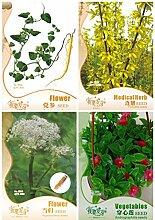 Diy Seltene Kräuter Pflanze leicht anzubauen Balkon Blume 4 Arten Blumensamen-DIY Hausgarten-Seeds 3