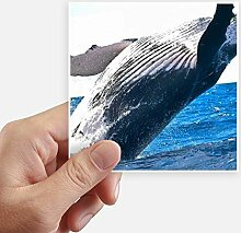 DIYthinker Meeresorganismus Wal Ozean Tier