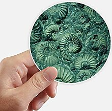 DIYthinker Nautilus Ammoniten Fossilien Specimen
