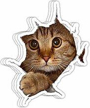 DKISEE Aufkleber mit süßem Kätzchen,