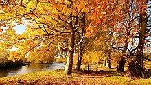 DKMDT 1000 Teile Puzzle Herbst, Blatt, Baum,