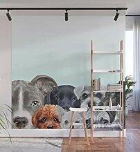 Dog all star 1 Fototapete Wohnzimmer Schlafzimmer