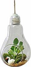 Doitsa 1pcs Vase Glühbirne Modellierung Glas Vase