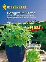 Dominik Blumen und Pflanzen, 910273 Kiepenkerl Honigkraut Stevia Sweet Honey
