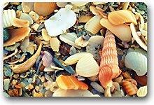 DOUBEE Design Seashells Pebble Fussmatte Premium Schmutzmatte Fußabstreifer im Freien Innen 46cm X 76 cm