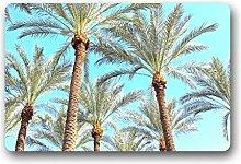 DOUBEE Design Sunset Palm Trees Fussmatte Schmutzmatte Fußabstreifer Garten Nach Hause 46cm X 76cm