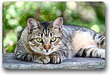 DOUBEE Generisches Cat Fussmatte Premium Schmutzmatte Rechteckige Garten Nach Hause Türmatte 60cm X 40cm