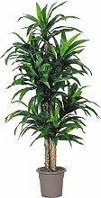 Dracena VerdeKünstliche Zierpflanze mit