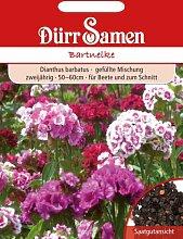 Dürr Samen 0748 Bartnelke (Bartnelkensamen)