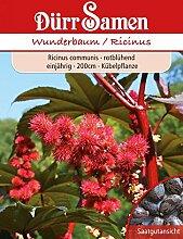 Dürr Samen 1365 Wunderbaum rot (Wunderbaumsamen)