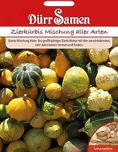 Dürr-Samen Zierkürbis Mischung aller Arten