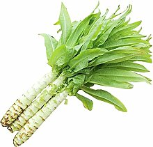 Duftender Kopfsalatsamen-Balkon Gemüseanbau
