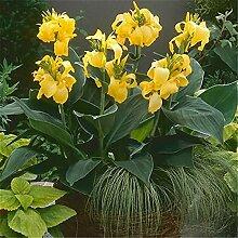 Duftender resistenter Garten Seltene Arten Balkon