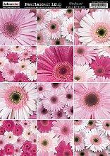 Dunkelkammer Tür A4Gerberas Perlglanz-Papier, Pink, 10Stück rose
