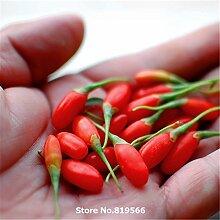 Echt Goji Beeren Samen Beeren-Baum Bonsai Sementes Garten Kräuter Pflanze Bocksdorn Außenbocksdorn Seed