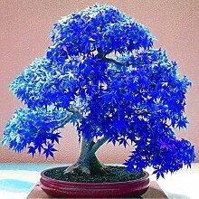 Echte Dahlienzwiebeln, Dahlien blühen, (nicht Dahlie Samen), Bonsai Blumenzwiebeln, Symbolisiert Mut und Glück, Hausgarten Pflanze-2 Birnen