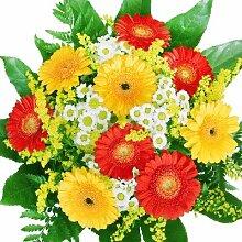 Echte Gerbera Blumen - Blumenstrauß Sommerzeit -